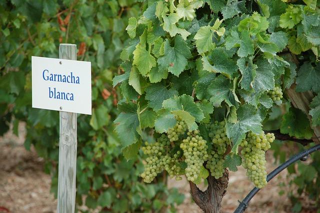 Waarom Spaanse wijn steeds populairder wordt